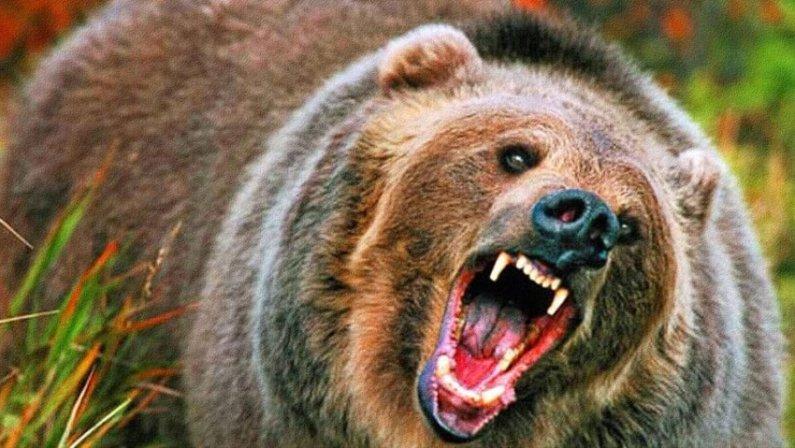 Журналисты предупредили английских болельщиков о нападении российских медведей на ЧМ–2018