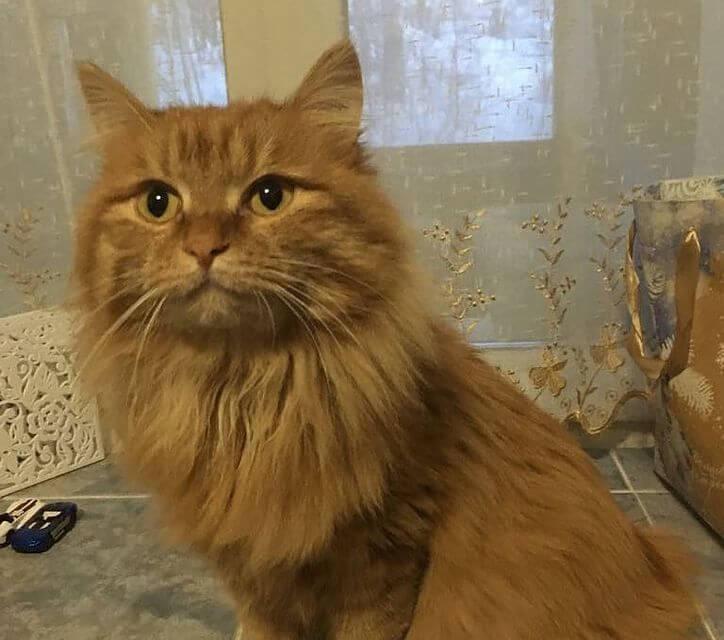 Кошку-прогнозистку продали за 4 миллиона рублей