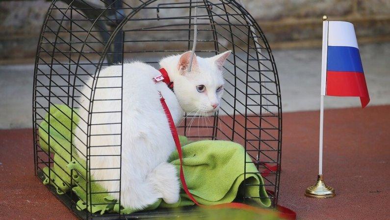 Эрмитажному коту-предсказателю матчей ЧМ–2018 выдадут паспорт болельщика
